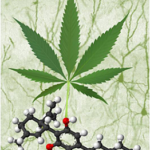 cannabinoids embryo