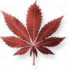 page01 image02 marijuana leaves el