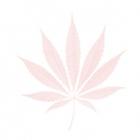 page07 image01 bg marijuana leaf el